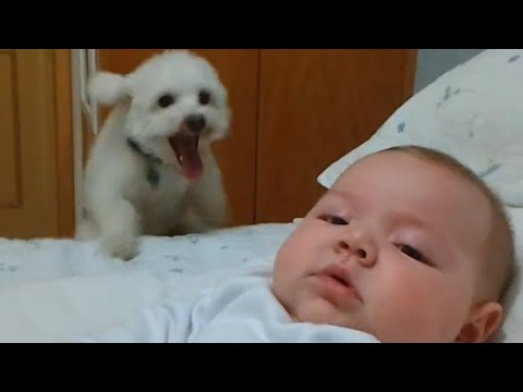 Bouncing Puppy Loves Cute Baby
