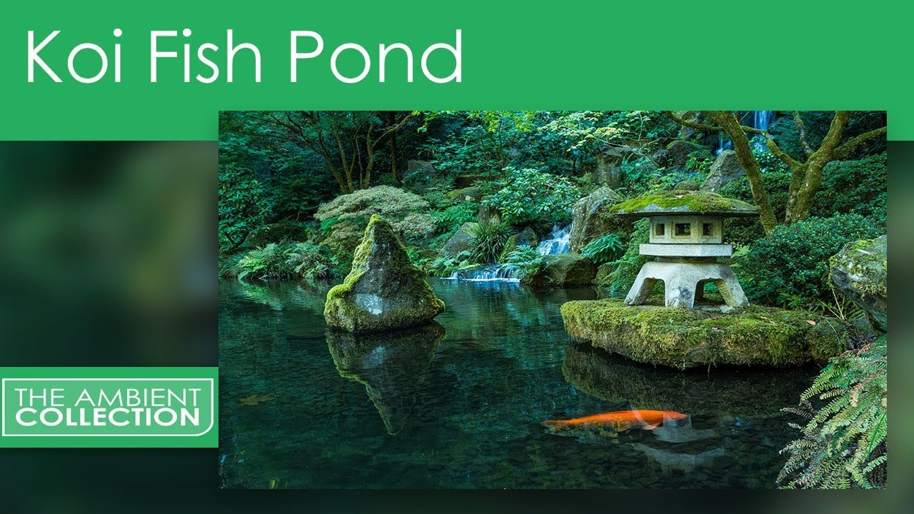 Relaxation DVD - Koi Fish Pond With Nature And Water Sounds - YouTube