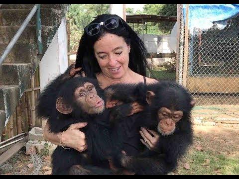Orphaned Baby Chimps Find Refuge