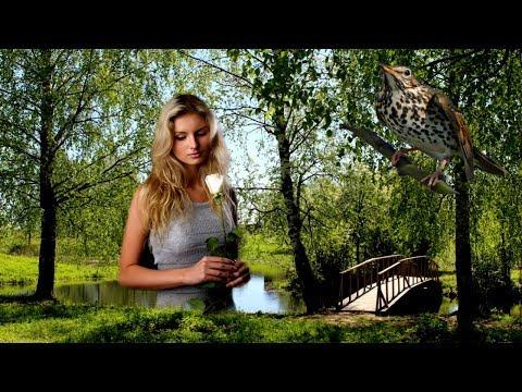 👍 Соловушка 💔 Песня Про Любовь и Измену - За Душу Берет! Вы Только Послушайте!