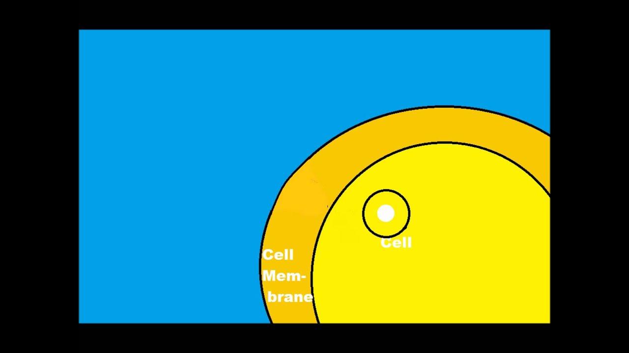 My Final Endocytosis/Exocytosis Video - YouTube