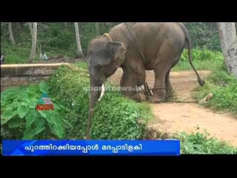 Cruelty against elephant in Parassala Mahadeva Temple