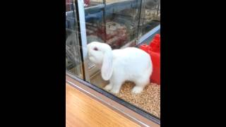 Bunny rabbits at the pet shop