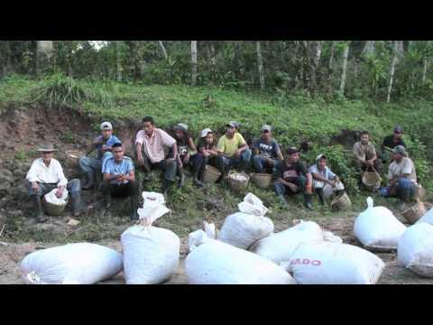 Hawit Family Coffee Farm, Yoro, Honduras