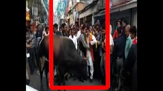 Baixar Mukul Roy chased by ox during Chhat celebrations at Siliguri