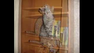 На вечную память нашему коту ТИГРА