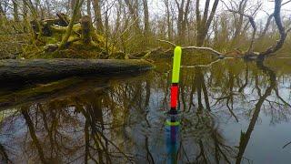 О ТАКОМ КЛЁВЕ ТОЛЬКО МЕЧТАТЬ Рыбалка на маховую удочку