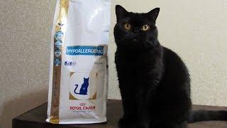 Кошка Моня и гипоаллергенный корм