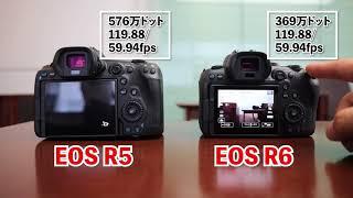 【カメラ】EOS R5とEOS R6を実際に触ってきました!そして新レンズも!
