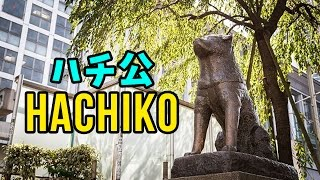 Hachiko ハチ公 - One of the most iconic things in Tokyo!   JAPAN101