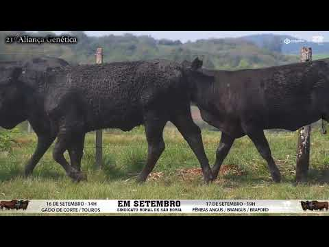 LOTE 089
