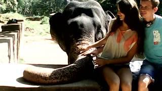 Фото возле слона