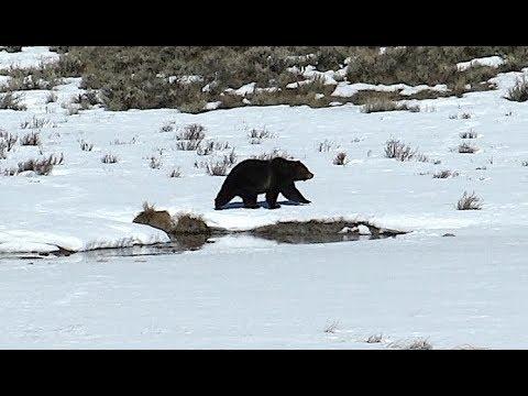 Hiking Yellowstone - March 31