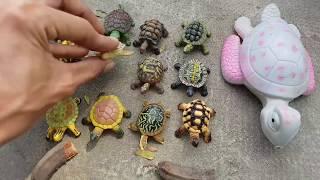 Trò Chơi Đi Tìm Rùa Con ❤ ChiChi ToysReview TV ❤ Đồ Chơi Trẻ Em Baby Toys