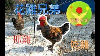 【花雞兄弟】台灣最好吃的雞  花雞兄弟帶你看 無藥物農場  帶你抓雞  吃好雞  煮好雞  {上好滴雞精 } 崑鴻商行