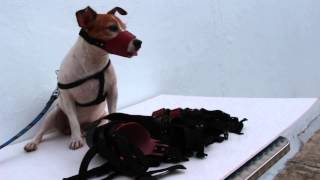 Leather dog muzzles for sale by Toa Payoh Vets, Singapore
