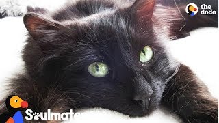 Nervous Cat Helps Guy Feel Connected To The World | The Dodo Soulmates