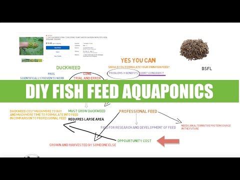 DIY fish feed - BSFL & Duckweed | Ask The aquaponics God