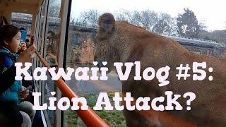 The Tama Zoological Park | Zoo in Tokyo Japan | Kawaii Felting Japan Vlog #5