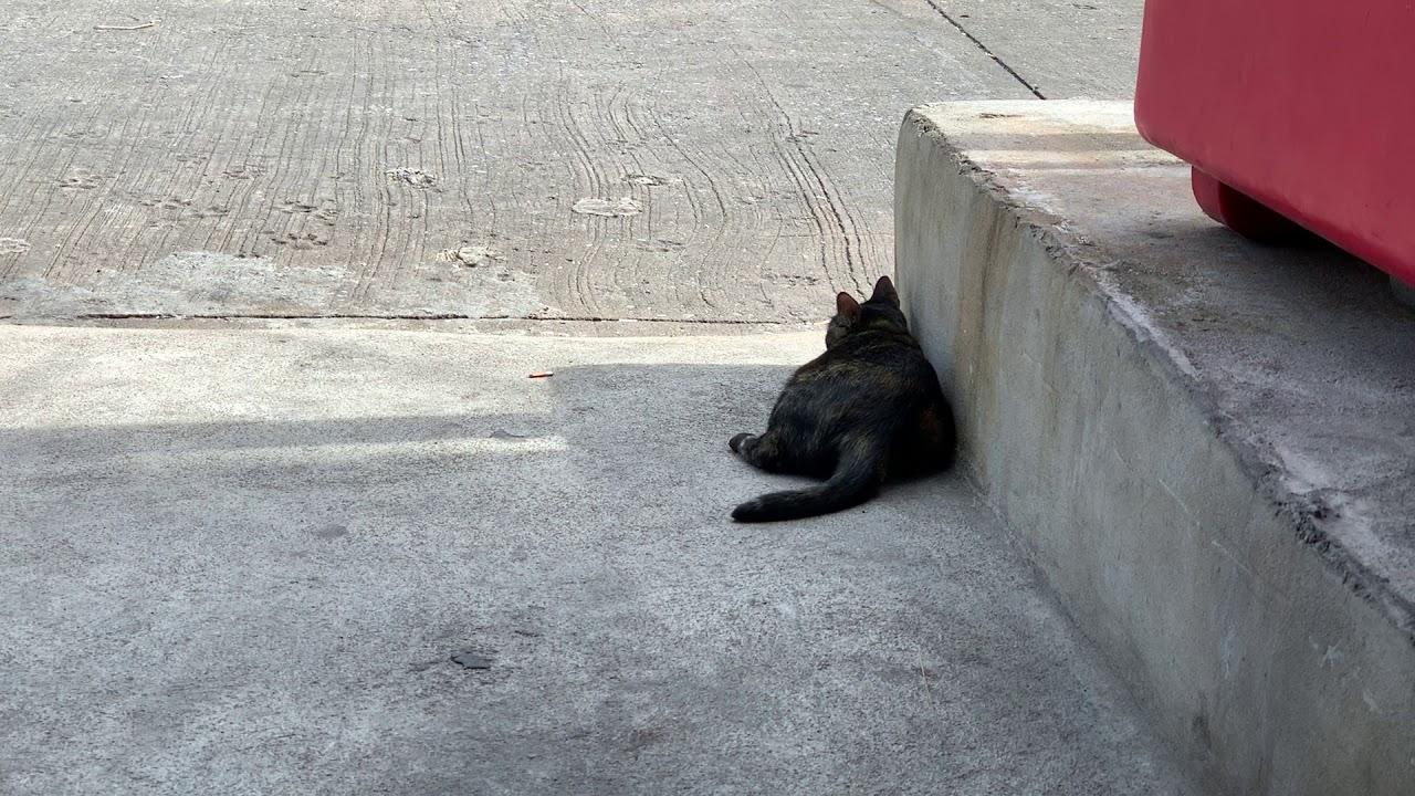 พาแมวอาบแดด คันๆกระสวยบอก