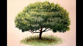 Как нарисовать поэтапно дерево. Живопись гуашью для начинающих