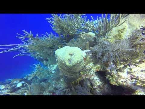 GrandTurk 2nd Dive, Oct. 26, 2015