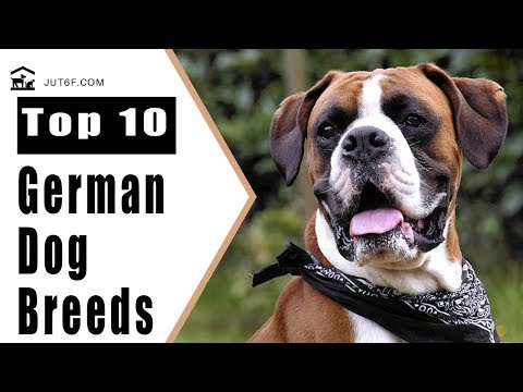 Top 10 German Dog Breeds