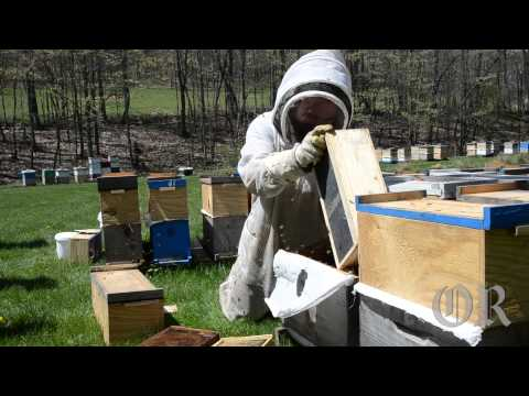 Down On The Honey Bee Farm