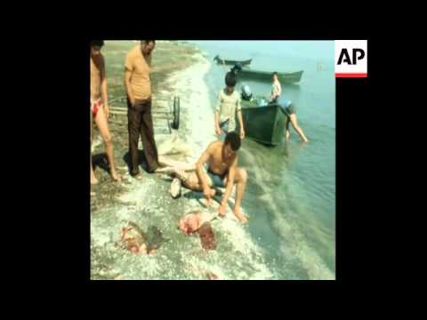 SYND 23 6 79  SEA ILLEGAL FISHING OF STURGEON IN CASPIAN SEA AND CAVIAR CANNERIES