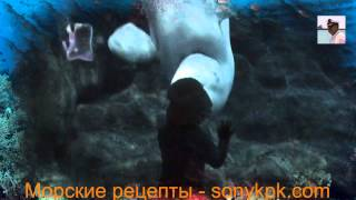 Поцелуй незнакомца видео. Ребенок целуется поцелуй незнакомца дельфина