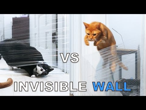 My Cat's Reaction To The Invisible Challenge (Noah vs Lizzy)