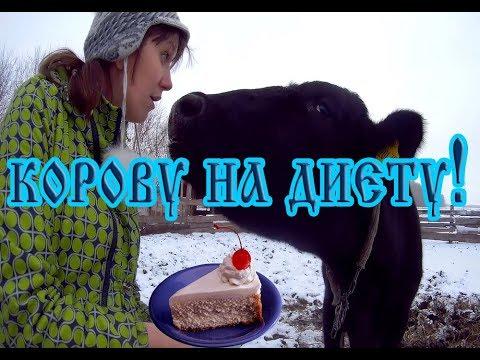 24 янв 2018. После того как президент заявил, что наличие у каждой семьи 3-4 коров позволит людям жить достойно, редакция sputnik кыргызстан.