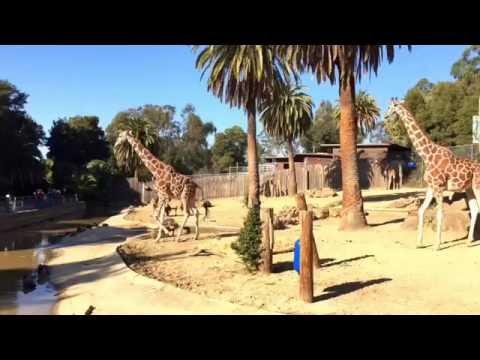 Oakland Zoo, Oakland, California (Bay Area)