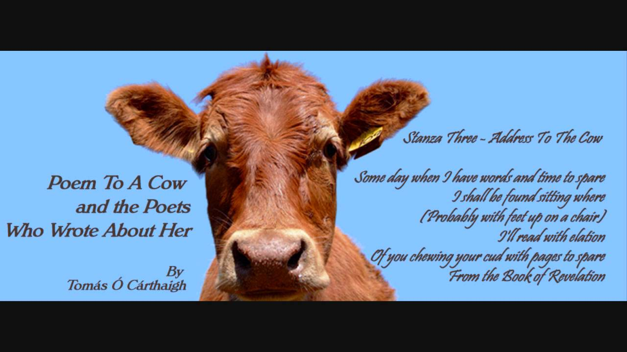 Uncategorized Cow Poems poem to a cow and the poets who wrote about her after she ate bible