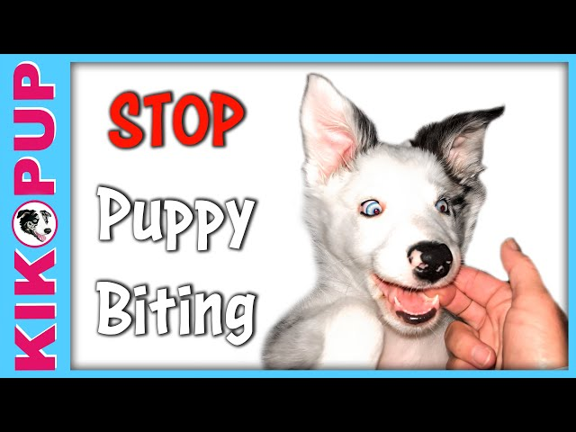 Stop puppy biting with handling games