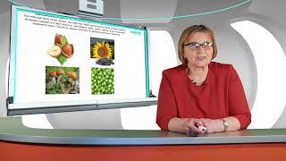 3. Особенности питания на гемодиализе