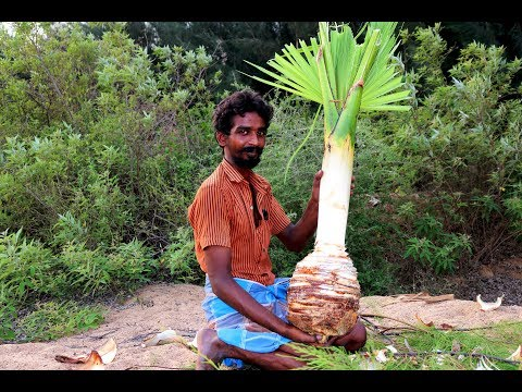 village boys take to palm rice in palm tree | pana soru | village food taste
