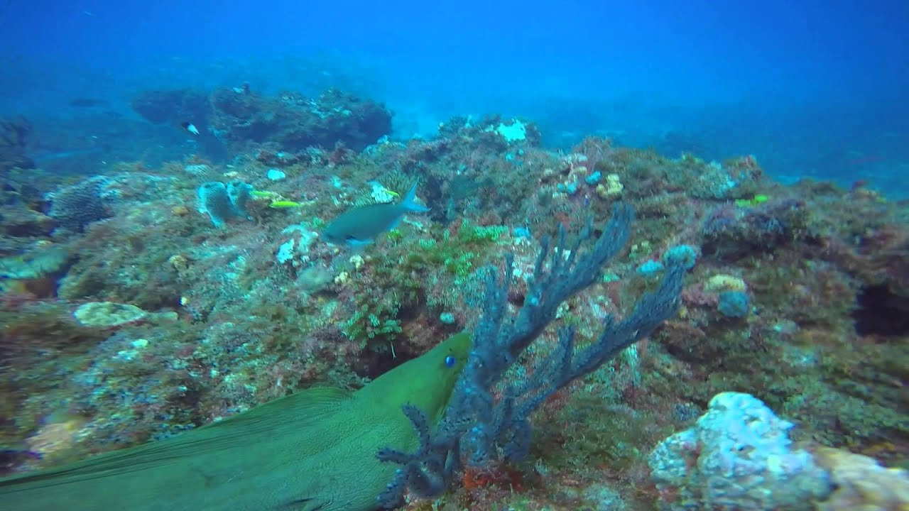 Scuba Diving Jupiter Florida July 19th, 2015