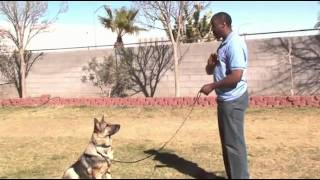 Las Vegas Dog Training And Day Care Call (702) 302-2667