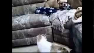 Кошки против собак. Прикольные собаки и кошки. funny cats and dogs
