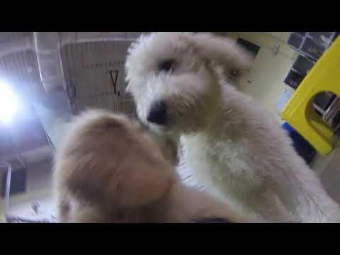 Murphy's Evaluation at Fur-Get Me Not Dog Daycare