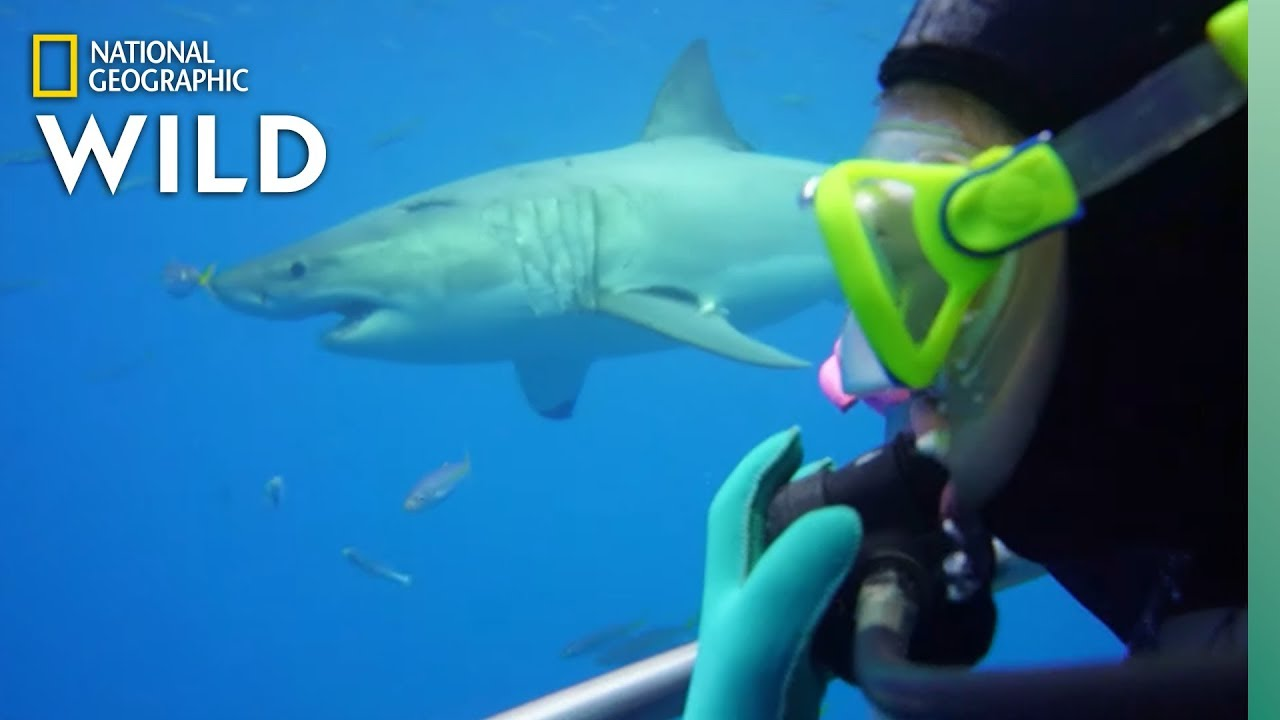 How Scientists Study Sharks | Nat Geo Wild