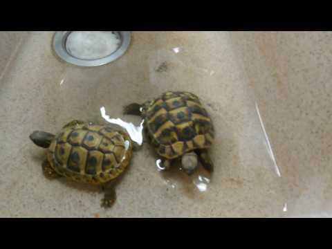Schildkrötenwellness - Ich bade meine Krötchen