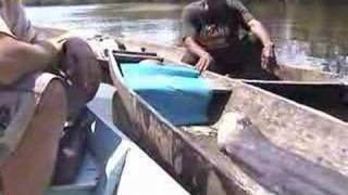 Repeat youtube video The biggest giant electric eel