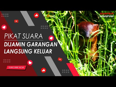 MASTER SUARA GARANGAN - DURASI 30 MENIT Mp3