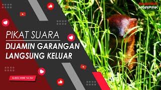 MASTER SUARA GARANGAN - DURASI 30 MENIT