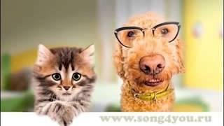 Песня кота и собаки