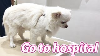 狂犬病の予防接種とノミ・ダニ対策、そしてフィラリアのお薬をもらうた...