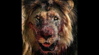 Смертельные бои    Deadly battles    Схватки диких животный