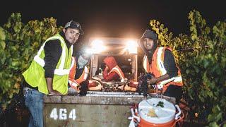 Ludor Cabernet Night Harvest 2020